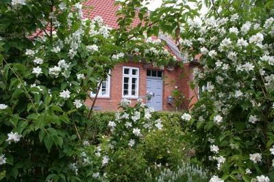 ferienwohnung alte schmiede in ratzeburg inselstadt. Black Bedroom Furniture Sets. Home Design Ideas