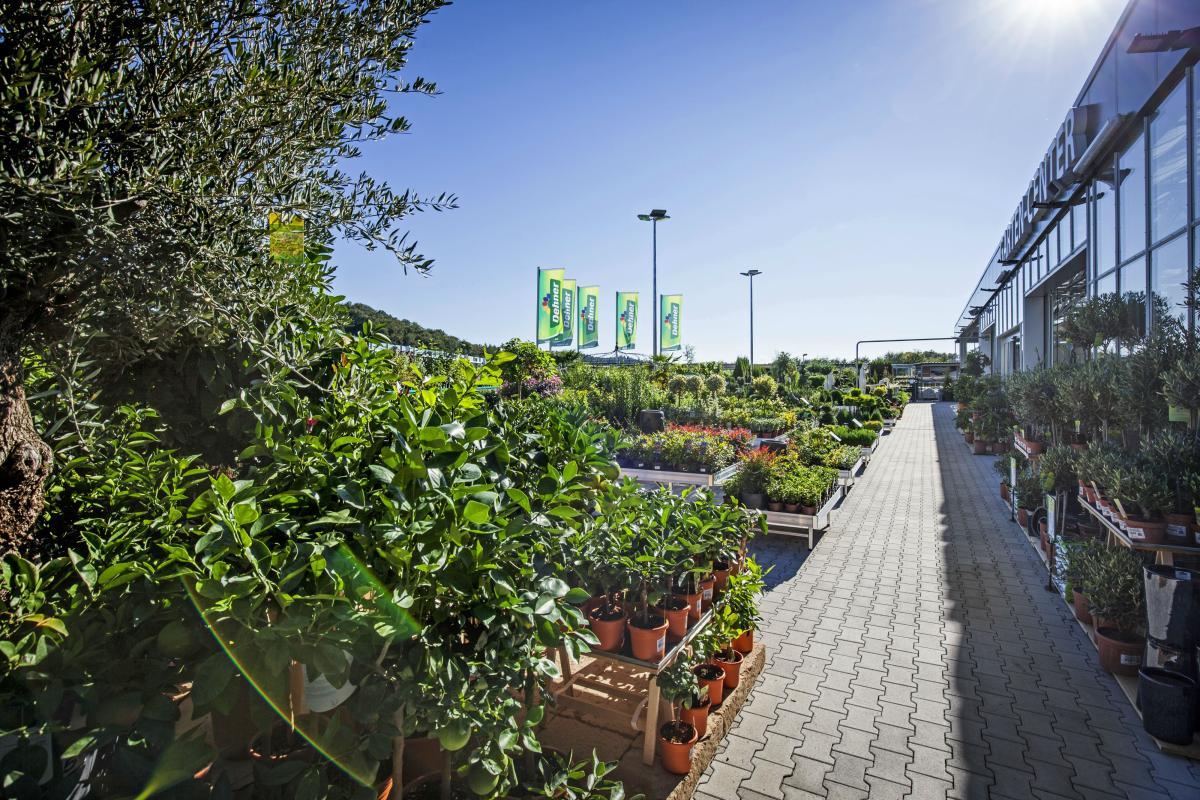 Dehner Garten Center Gartnereien Baumschulen In Waldshut Tiengen Offnungszeiten