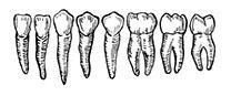 Zahnarztpraxis Rößler