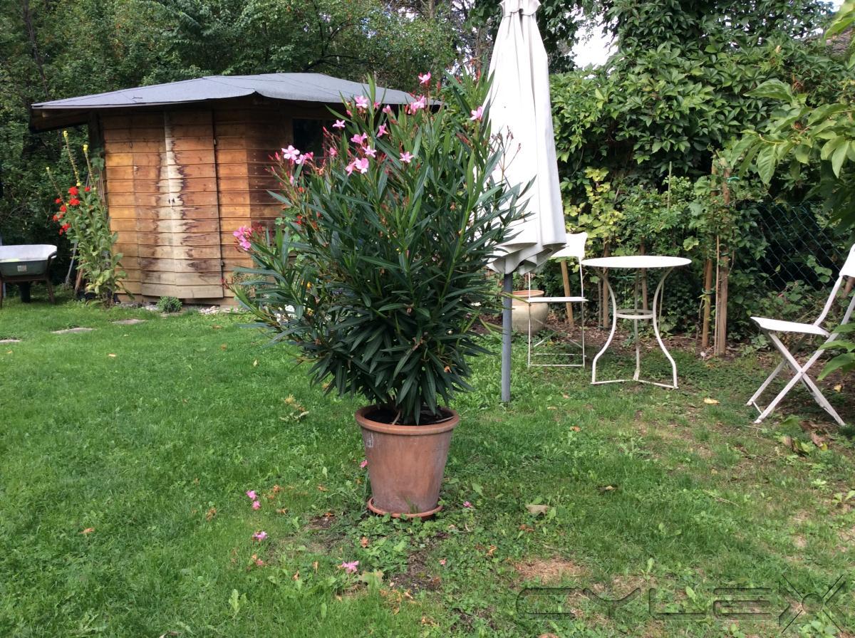 heizschlangen f r olivenbaum abdeckung ablauf dusche. Black Bedroom Furniture Sets. Home Design Ideas