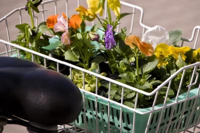 Blumenladen maigl ckchen in berlin karow ffnungszeiten for Pflanzen lieferservice