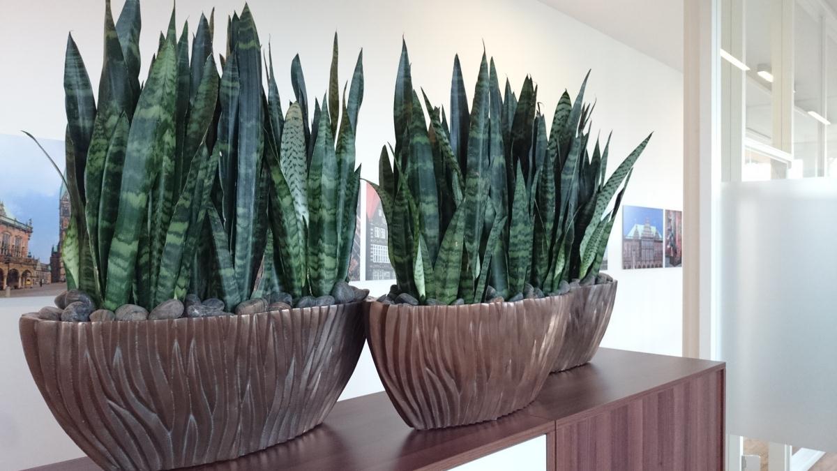 euflora begr nungskonzepte produktion und vertrieb von. Black Bedroom Furniture Sets. Home Design Ideas