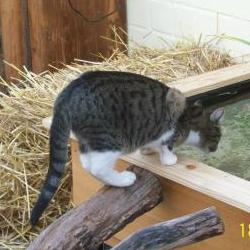 Katzenhotel niedenstein